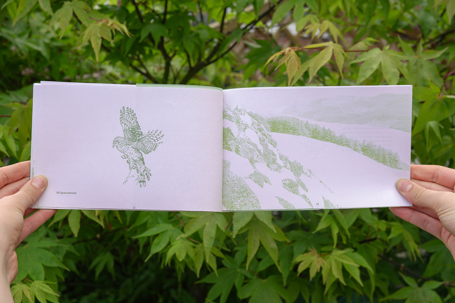 Sparrowhawk Illustration in green, in front of leaves background