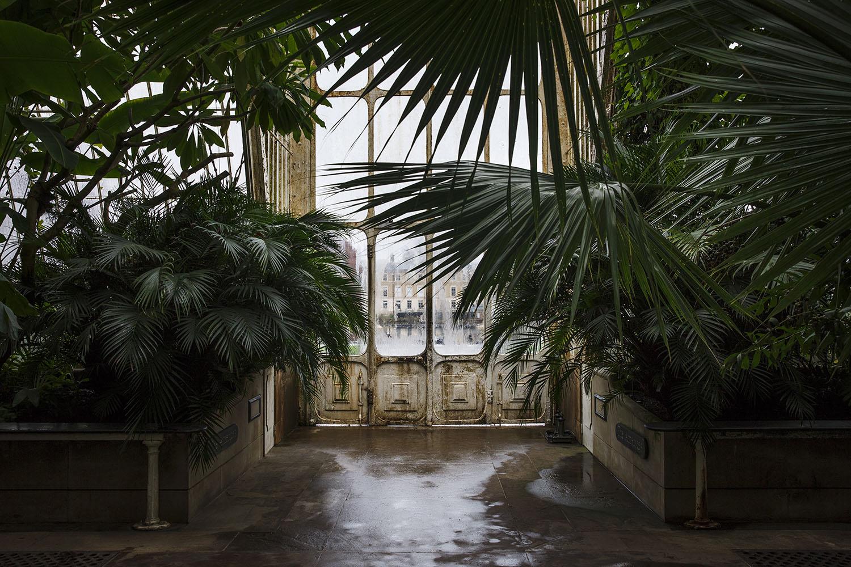 photo of palms inside