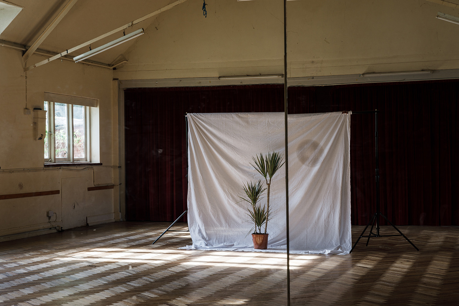 studio set up with potted palm in front of a white sheet