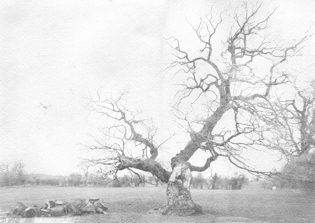 faded image of a tree