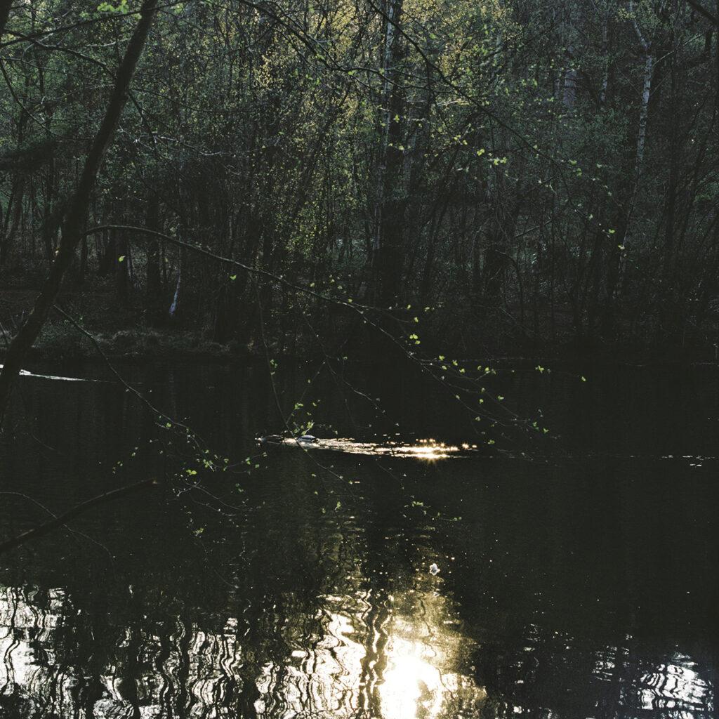 Light through trees hitting water